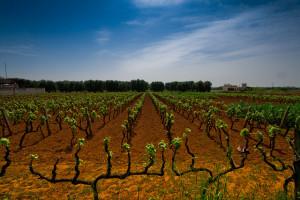 Soirée découverte - L'Italie, le Sud et les Iles @ Wine and More   Namur   Wallonie   Belgique
