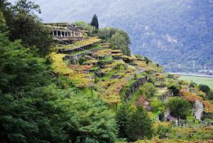 Soirée découverte - l'italie, de l'Adriatique au Mont Blanc @ Wine and More | Namur | Wallonie | Belgique