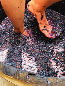 Wine Diner Antinori Puglia - Day 1 @ Wine and More | Namur | Wallonie | Belgique